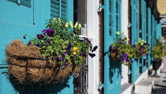 Flower pot handing on a blue door